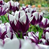 50pcs / Sac Graines De Tulipe Parfum Naturel Accrocheur Graines De Bonsaï De Balcon Multi-usages Rose Graines de...