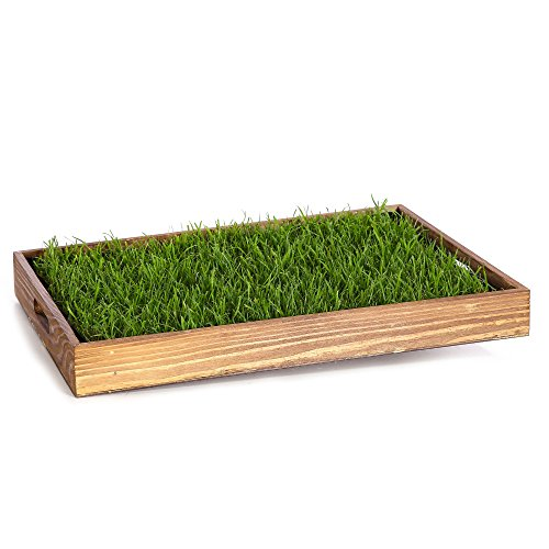 Miau Katzengras inklusive Dekotablett'Cookie Brown'   60x40cm echtes, saftiges Gras   sofort nutzbar - kein aussäen   (Cookie Brown)