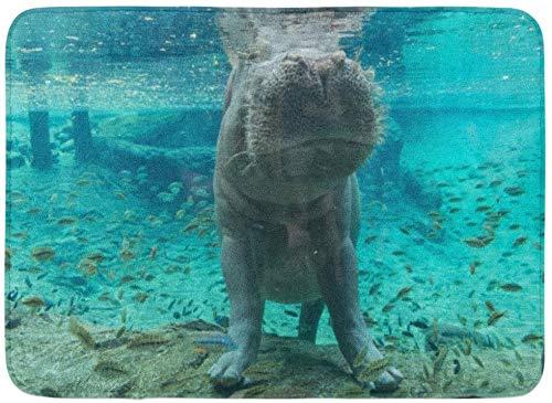 LiminiAOS Fußmatten Badteppiche Outdoor/Indoor Türmatte Blaues Aquarium Nilpferd in Tampa Florida Grüner Busch Garten Wildlife Badezimmer Dekor Teppich Badematte