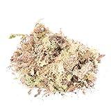 Materiali 1Pack 12L Sphagnum secco Moss Garden Idratante nutrizione organico fertilizzante per Orchidea Phalaenopsis Sphagnum casa