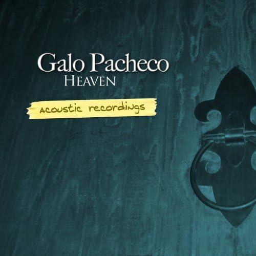 Galo Pacheco