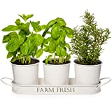 Herb Pots with Tray Set, Indoor Herb Planter, Farmhouse Inspired Decorative Herb Garden Planter with Drain Holes for Healthy Plants, Ideal for Indoor Windowsill