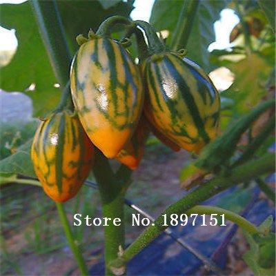 Big Sale 100 graines, ronde Violet Aubergine Graines Aubergine Graines de légumes