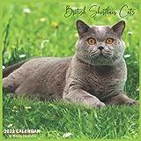 British Shorthair Cats Calendar 2022: Official British Shorthair Cat Breed Calendar 2022, 16 Month Calendar 2022