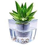 Water Herb Garden, AIBIS Hydroponics Growing System, Organic Self Watering Planter Indoor Sprouts Gardening...