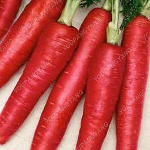 200pcs pourpre graines de carotte arc-en-Anti-âge ginseng bonsaï plantes en bonne santé sucre biologique semences potagères pour jardin vert