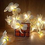 Creative Bricolage frangipanier LED Guirlandes, AA éclairage de vacances, décoration florale batterie guirlande Party événement, décoration Chambre (Wattage : 5 meter 40 leds)