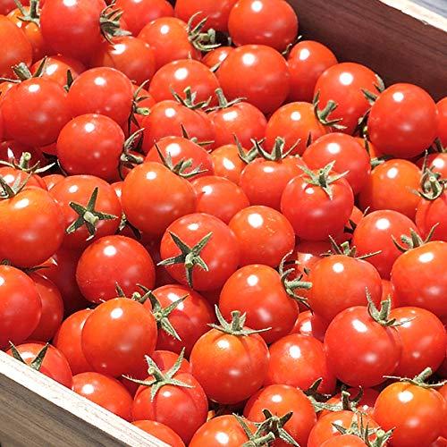 北海道 南幌町産 ミニトマト ラブリー藍 2kg 南幌町明るい農村ネットワーク とまと トマト 野菜 お取り寄せ