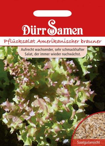 Dürr Samen 0028 Schnittsalat Amerikanischer Brauner (Schnittsalatsamen)