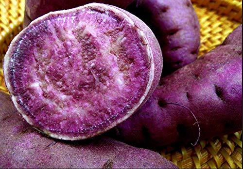 PLAT FIRM Semillas DE GERMINACION: 200 Piezas de Semillas de Patata Morada, deliciosas Semillas de Vegetales Verdes