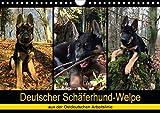 Deutscher Schäferhund-Welpe - aus der Ostdeutschen Arbeitslinie (Wandkalender 2020 DIN A4 quer)