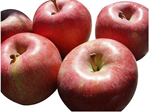 わけあり 青森県産りんご B級品 ふじ 10kg(10キロ) ダンボール詰