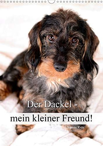 Der Dackel - Mein Be gift super welcome Kleiner Freund DIN Wandkalender 2021 A3 hoch