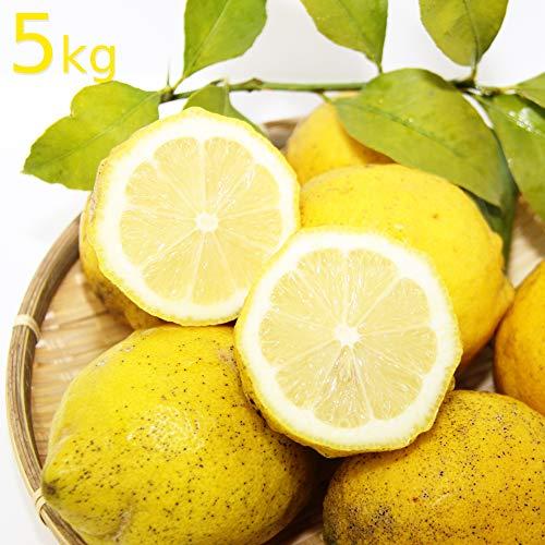 農園直送 広島県産 レモン 約5kg サイズいろいろ 皮まで食べられます 国産レモン 広島県呉市豊島 竹川農園