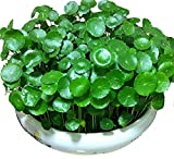 Pennywort Seesd Hydrocotyle 100+ Organic Aquatic Planting Easy to Grow Money Coins Grass Seeds for...