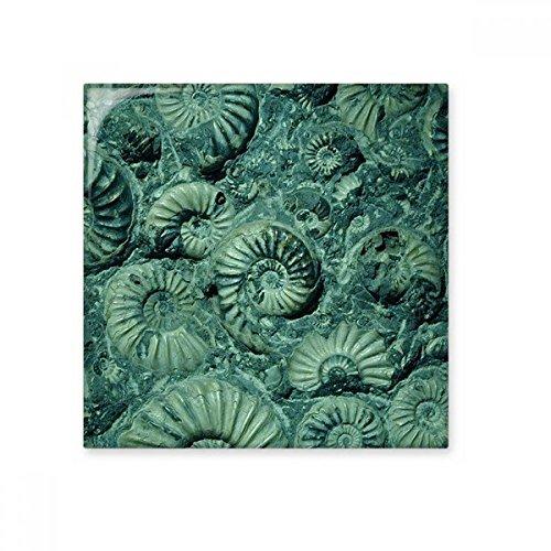 Nautilus Fossilien Ammoniten SPECIMEN Keramik Bisque Fliesen Badezimmer Decor Küche Keramik Fliesen Wand Fliesen, sku00202358f15394-S