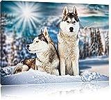 Zwei wilde Huskies, Format: 120x80 auf Leinwand, XXL riesige Bilder fertig gerahmt mit Keilrahmen, Kunstdruck auf Wandbild mit Rahmen, günstiger als Gemälde oder Ölbild, kein Poster oder Plakat