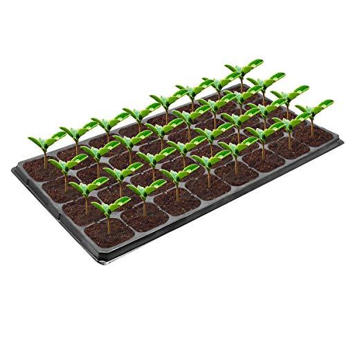 Vockvic Lot de 12 Bac à semis, 32 Trous Mini Serre pour semis Plateau de Germination, Plastique Plateaux de Démarrage de Semis avec Trous de Ventilation pour Emarrage et Croissance Semence