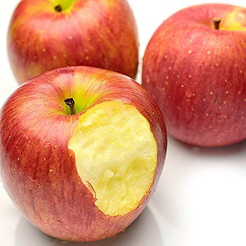 国内産 訳あり リンゴ 2.5kg バラ詰め サイズ無選別 りんご