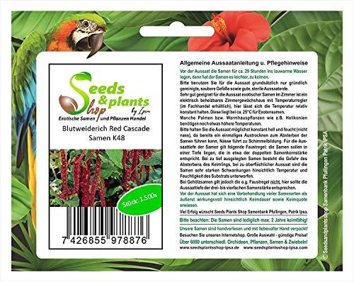 Stk - 1500x Blutweiderich Red Cascade-Fuchsschwanz Samen Garten Pflanze Blumen K48 - Seeds Plants Shop Samenbank Pfullingen Patrik Ipsa