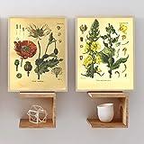 None brand Vintage botanique Imprime Pavot Plante de Velours Affiche Mur Art Toile Peinture Plantes médicinales encyclopédie Affiches décor à la maison-40X60cm * 2 Rouleaux de Toile