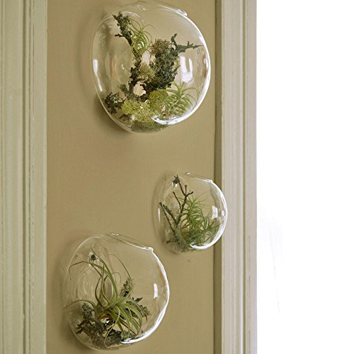 Set of 3 Wall Bubble Terrariums Indoor Plants Holders Wall Glass Vase for Flowers Wall Mounted Planters for Succulents Air Plants Wall Decoration for Sunroom Living Room