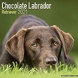 Hunderassen-Kalender Breeds H-R Labrador Retriever, Schokolade