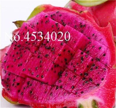 Kalash Nuevos 100pcs semillas de frutas Pitaya para jardinería Rojo