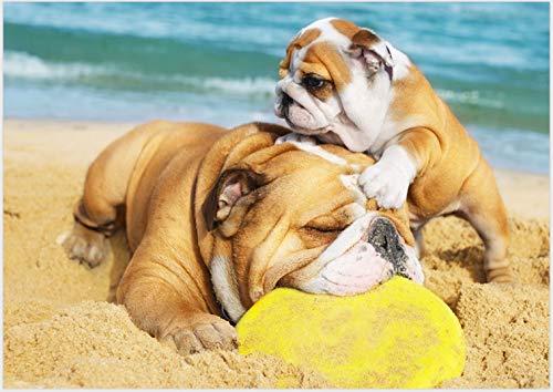 Americana SOTTOCIOTOLA für Hund Serie Funny Foto Dog 2 Bull Dog