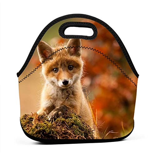 Cainy Cute Little Fox (2) Lunch Bag Tote Bag Lunch Bag Lunch Box Contenitore Pranzo Isolato