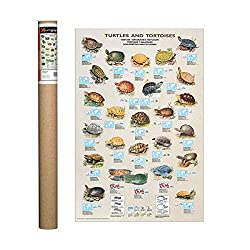 Turtles and Tortoises Poster