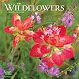 Wildflowers 2020 Calendar - Browntrout Publishing