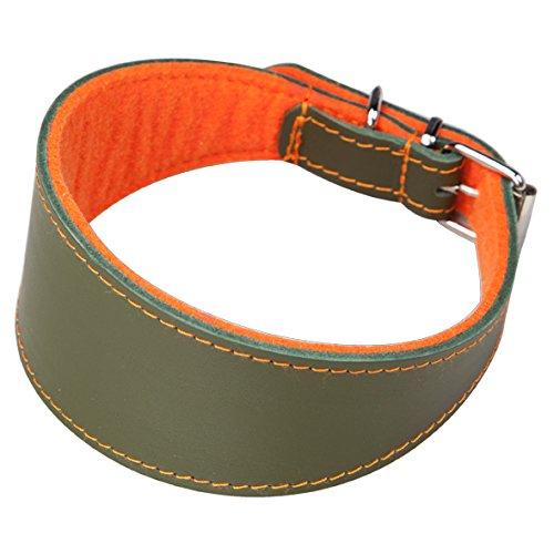 Arppe 2155013592 Collar Galgo o Cuero Superfelt, Naranja y Verde 🔥