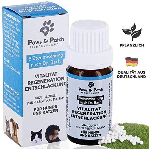 Paws & Patch Bachblüten für Hunde & Katzen VITALITÄT Regeneration ENTSCHLACKUNG, als Reinigungskur, Detox zum Entgiften und Entschlacken