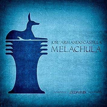 Melachula