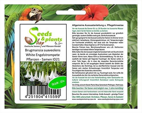 Stk - 10x Brugmansia suaveolens White Engelstrompete Pflanzen - Samen ID21 - Seeds Plants Shop Samenbank Pfullingen Patrik Ipsa
