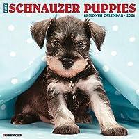 Just Schnauzer Puppies 2021 Calendar