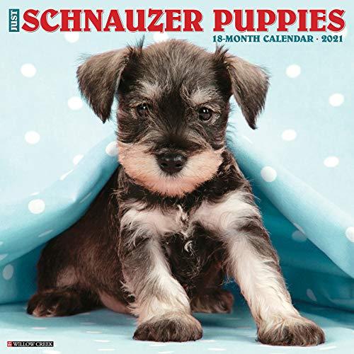 Just Schnauzer Puppies 2021 Wall Calendar (Dog Breed Calendar)