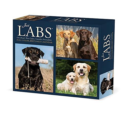 Labs 2022 Box Calendar - Dog, Labrador Retrievers Daily Desktop