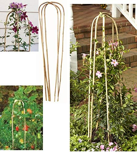 A2Z Home Solutions Garden U-Hoop Bamboo Trellis Stakes Ideal For Flowers vegetables Plants Support - Pack of 3