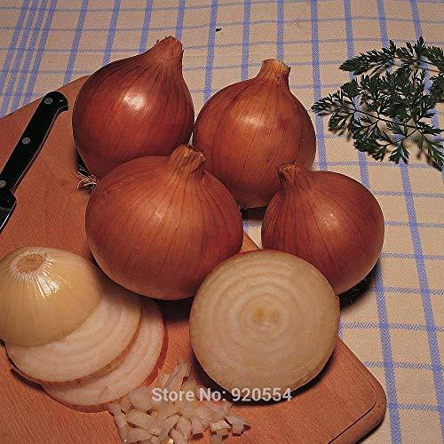 50pcs/lot jaune « Champion Bedfordshire » oignon, les graines de Allium cepa bonsaï Maison & Jardin Plantes Bricolage Livraison gratuite # Y21