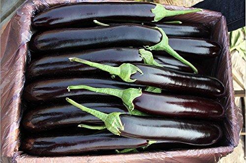 100 Red Onion semences de légumes,