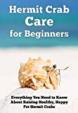Hermit Crab Care for Beginners: Everything You...