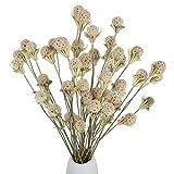 XHXSTORE 40PCS Ramo de Flores Secas Craspedia Flores Secas Naturales Blancas para Florero Ramo DIY Arreglo Floral Mesa Decorativa Boda en Casa