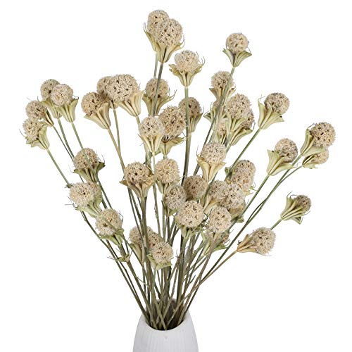 XHXSTORE 2Pcs Dried Grass Stems Dried Pine Ball Flowers Natural Dried Pine Cones Dried Bundles Artificial Handmade White Flowers for Christmas Decor