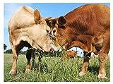 djjinhao - 1000 Piezas Puzzle - Vaca y Vaca - Rompecabezas para niños Adultos Juego Creativo Rompecabezas Navidad decoración del hogar Regalo