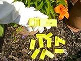 12x gabbie per api e ape regina