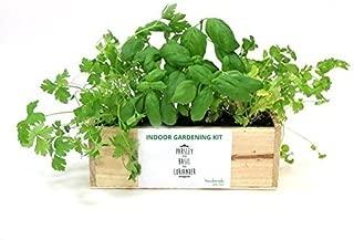 Amazon.es: 20 - 50 EUR - Plantas, semillas y bulbos: Jardín