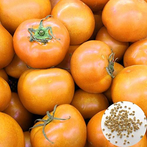 Catkoo 100 Piezas De Semillas De Tomate Naranja Home Bonsai Garden Fruit Vegetable Nutrition Plant, No GMO, Rico En Vitamina C Semillas de Tomate Naranja