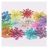 KXLBHJXB 12 / 30Pcs Gepresste Trockene Blume Trockene Pflanze Halskette, die Fertigkeit DIY Zubehör künstliche Blumen-Dekoration Getrocknete Blumen (Color : 12)